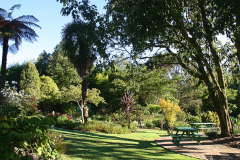 Garden at the end of Summer