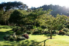 Lawns at end of Summer